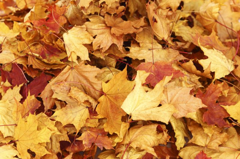 collect autumn leaves news sunnydale garden centre torfaen